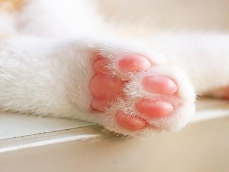 猫の手(肉球アップ)の写真