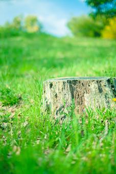 自然 植物 切り株 木 樹木 伐る 幹 草 草原 原っぱ 野草 野生 雑草 緑 地面 土 広い 広大 壮大 雄大 ピンボケ ぼやける 空 雲 青空 天気 晴天 晴れ 青い 白い 木 樹木 無人 風景 景色 室外 屋外 爽やか 幻想的