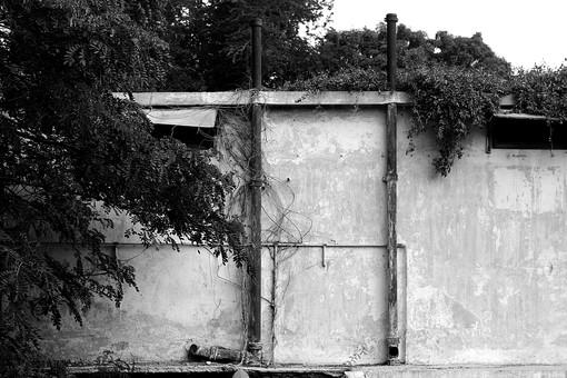 白黒 モノクロ 建物 塀 外壁 垣根 パイプ コンクリート 石 樹木 自然 景色 風景 植物 樹 木 大木 葉 葉っぱ 枝 森 蔦 工場 家 建造物