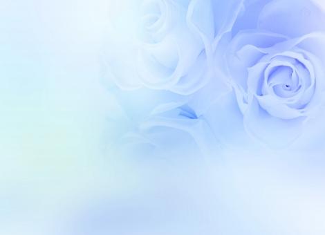 薔薇 バラ ばら 淡い ブルー 青 花 フラワー 背景 パステル バックグラウンド 壁紙 テクスチャ エステ きれい 美しい ウェディング ブーケ ブライダル 結婚 結婚式 飾り 花飾り 花模様 装飾 デコレーション 美容 母の日 ホワイトデー バレンタインデー バレンタイン 招待状 ウェルカムボード 誕生日 誕生日カード ポストカード お祝い 記念日 メッセージカード メッセージ ギフト ギフトカード 模様 女性 女性的 上品 エレガント