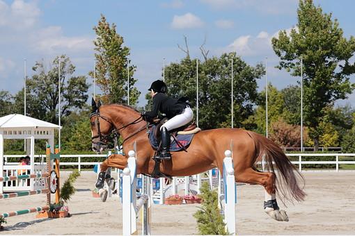 生物 人物 馬 馬術 競技 跳馬 跳ぶ 操る 騎手 ジョッキー 乗馬 障害 障害物 バー 棒 馬場 自然 空 雲 青空 木 樹木 植物 室外 屋外