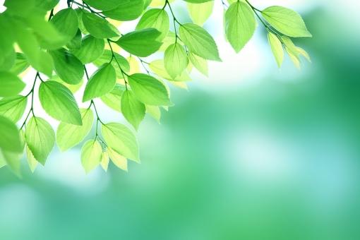 自然 植物 樹木 木立 森 木 葉っぱ 木の葉 新緑 グリーン 緑 初夏 五月 クリーンイメージ 待ち受け画面 ポストカード コピースペース 光 木漏れ日 透過光 黄緑 若葉 背景 バックグランド 暑中見舞い