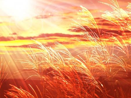 秋 背景 夕焼け 夕日 光 AUTUMN オータム autumn 雲 空 自然 秋の背景 秋の空 夕日素材 すすき 薄 ススキ 綺麗 鮮やか 気持ちいい 10月 11月 秋の背景 テクスチャ テクスチャー 合成 雲 夕日背景 夕焼け風景 11月