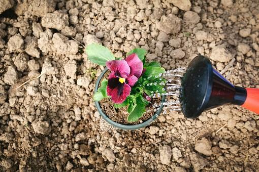 ガーデニング 園芸 栽培 花 紫 苗 草花 フラワー 葉 植物 植木鉢 鉢 ポット 土 土壌 培養土 じょうろ 水やり 育てる 遣る 注ぐ 水分 ガーデン 庭 庭園 花壇 畑 庭仕事 庭いじり 土いじり 作業 手入れ 世話 園芸用品 屋外 野外