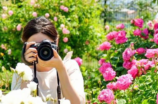 女性 植物 趣味 カメラ 写真 旅行 夏 花 バラ 晴れ 覗く 奥さん 一眼レフ 公園 花畑 春 開花 庭 自然 デート カメラマン 草 旅 庭園 嫁 ファインダー 撮る 一眼 彼女 デジカメ 写真を撮る カメラ女子 ミラーレス ミラーレス一眼 屋外で 花の 撮ってる姿 構えてる