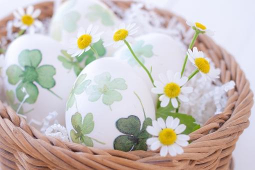 LUCKY HAPPY 玉子 卵 egg イースター easter 復活祭 四葉のクローバー 四つ葉 よつば かご バスケット マトリカリア 春