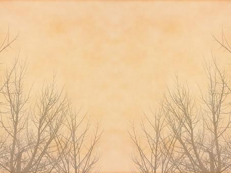 葉 木 枯木 樹木 シルエット 素材  植物 自然 ベージュ パターン  ナチュラル  空間 テクスチャ 質感 背景 背景素材 バックグラウンド テキストスペース コピースペース  秋 冬 余白 フレーム 枝 シンプル 半透明 不透明 柔らかい 加工 写真加工