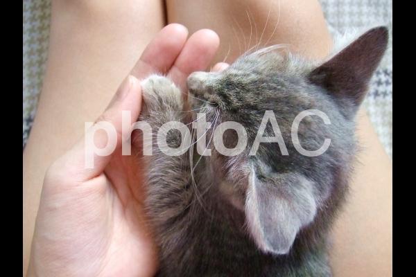 手のひらと子猫の写真