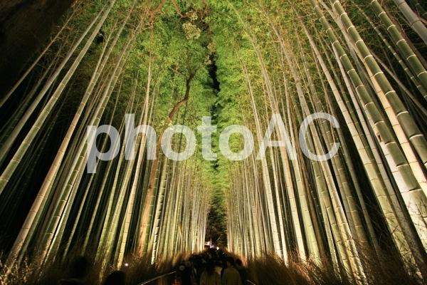 京都嵐山・竹林ライトアップ1の写真