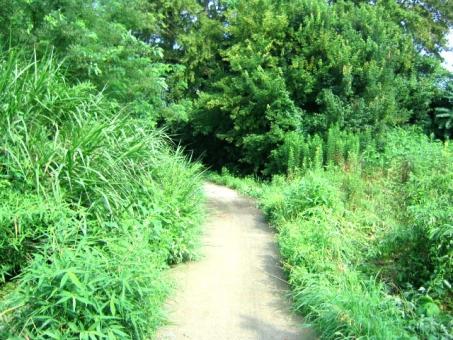 森 林 林道 林道ツーリング 緑 草 雑草 木 道 小道 迷子 山林 散歩 田舎 夏 夏休み 虫取り 探検 昆虫採集 藪 虫刺され 虫さされ 故郷 ふるさと 自然 緑豊か 環境 グリーン 植物 帰り道
