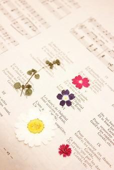 押し花 花 ドライフラワー 小花 植物  背景 背景素材 美しい かわいい 繊細な 英字新聞 楽譜 アンティーク 古い 音譜