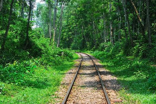 バングラディッシュ 外国 海外 自然 風景 景色 環境  植物 緑 森 林 晴れ 晴天 森林 樹木 樹 木 木々 広大 壮大 癒し 線路 路線 レール 砂利