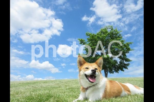 青空と丘の上の犬の写真