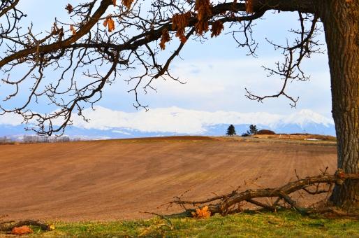 美瑛 美瑛の秋 茶色の畑 収穫 枯れ木 枝 ななめの畑 パッチワークの畑 秋の風景 秋の景色 北海道の景色 北海道の風景 北海道の大地 のどかな景色 フリー素材 フリー画像 植物 木 秋の木 枯れた木