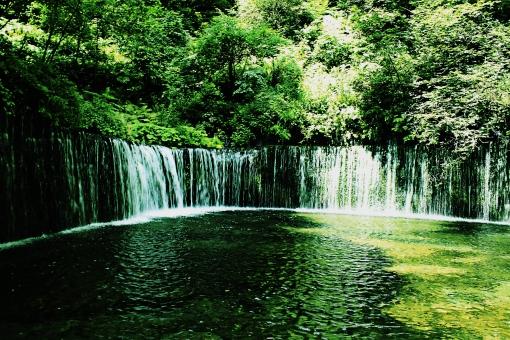 滝 植物 植木 樹 木 樹木 緑 自然 屋外 風景 景色 沢山 群生 葉っぱ 葉 茂る 生い茂る 生える 森 林 自生 水 落ちる 流れる 水面 マイナスイオン
