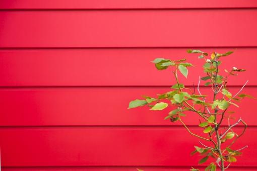 赤 レッド 壁 かべ カベ 板 ウッド 緑 グリーン 植物 素材 背景 背景素材 バック バックグラウンド 文字スパース コピースペース テキストスペース 真っ赤 真紅 テクスチャ web素材