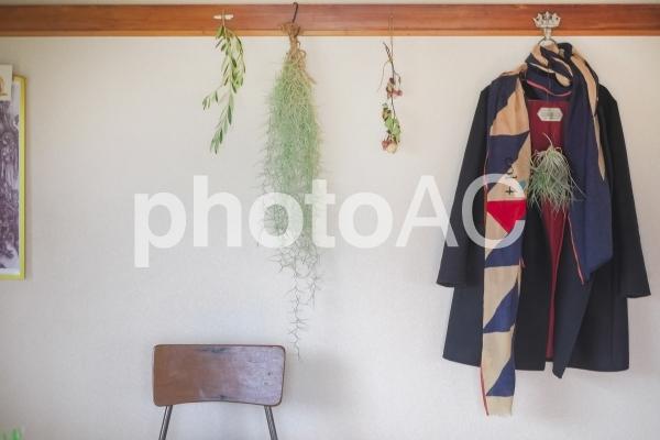 コートとストールとエアプランツの写真