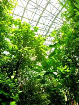 青空 グリーン 木 新緑 温室 ガラス 熱帯 湿度 南 亜熱帯 植物 ジャングル 森 葉 水 ドーム 植物園 暑 シャワー 密林 濃密 常夏 サマー 高温多湿 赤道