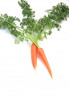 人参 ニンジン にんじん 野菜 二本 植物 食べ物 葉付き オレンジ 白バック コピースペース 縦向き 緑 みどり