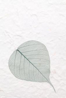 葉 葉っぱ 植物 葉脈 繊維 スケルトン 紙 和紙 手漉き紙 手漉き 手すき 手すき紙 手漉紙 一枚 1枚 一つ ペーパー 模様 工芸 背景 背景イメージ 背景素材 壁紙 テクスチャ テクスチャー 質感 バックグラウンド イメージ スタジオ撮影 アップ クローズアップ 白 緑色 余白 コピースペース 半透明 手作り