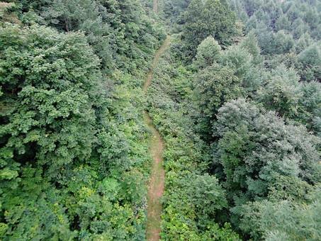 静か 喉か 平和 大地 自然 環境 問題 エコ 活動 風景 田舎 植物 リーフ 草 草花 大自然 生い茂る 茂る 緑 山 樹木 木々 森 森林 景観 空撮 上空 一本道 山道 グリーン