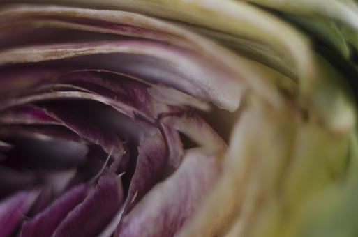 アーティチョーク キク科 チョウセンアザミ属 多年草 チョウセンアザミ 朝鮮薊 つぼみ 花菜類 植物 野菜 食料品 食品 食べ物 食べる 健康 フレッシュ 新鮮 自然 ダイエット 食材 農業 収穫 栄養 食物繊維 カット 半分 紫 アップ むらさき 葉