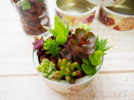 多肉 植物 多肉植物 セダム 芽生え リメイク 缶 グリーン ロハス ナチュラル 自然 デコパージュ ペンキ 塗料 光 コピースペース 余白 白 緑