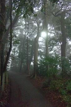 霧 靄 霞 朝もや 朝 早朝 天気 天候 weather 閑静 静寂 自然 緑 樹木 木 植物 風景 景色 穏やかな風景 穏やかな景色 fog monochrome モノクロ monotone モノトーン 五里霧中 朝の風景 朝の景色