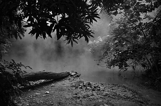 自然 植物 野生 葉 葉っぱ 緑 木 樹木 幹 枝 横たわる 折れる 池 沼 川 水 水面 映る 反射 土 泥 地面 育つ 成長 伸びる 生える 風景 景色 フィリピン 外国 熱帯 南国 東南アジア 島国 白黒 モノクロ グレー ねずみ色 灰色