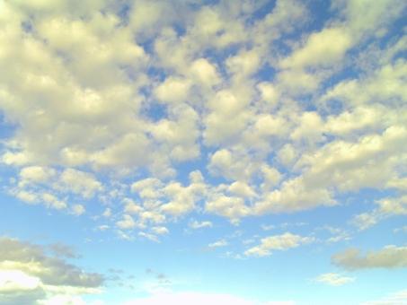 空 雲 秋空 秋 晴れ 天気 青 水色 白 天 昼 グラデーション 鱗雲 うろこ雲 巻積雲 いわし雲 さば雲 黄色 夕日