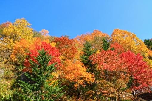 紅葉 色鮮やか 見ごろ 極彩色 豊平峡 美しい きれい 綺麗 青空 秋 秋晴れ 北海道 札幌