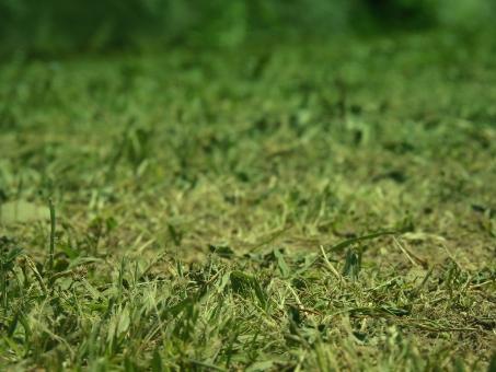 芝生 サッカーグラウンド 野球場 植物 庭 天然芝 ゴルフ場 ラグビー 競馬 フィールド ワールドカップ スポーツ 合成 アップ ぼかし ズーム 緑 黄緑 自然 背景 テクスチャ バックグラウンド レジャー 野外 アウトドア キャンプ 夏休み 休日 外出