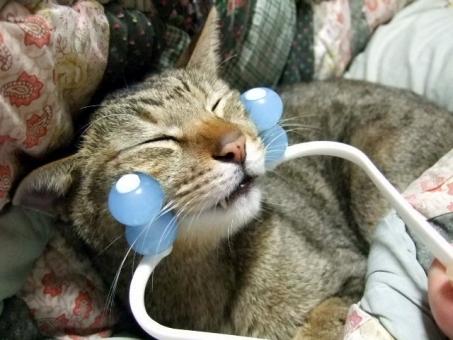猫 ネコ 美容 愛猫 小顔 マッサージ 美顔 表情 快適 リラックス くつろぐ 癒し 目をつむる 顔 1匹 面白い おもしろい 気持ちいい 幸せ リフトアップ 家猫 飼い猫 室内猫 動物 表情 ひげ 引き締め ちゃこ かわいい うっとり