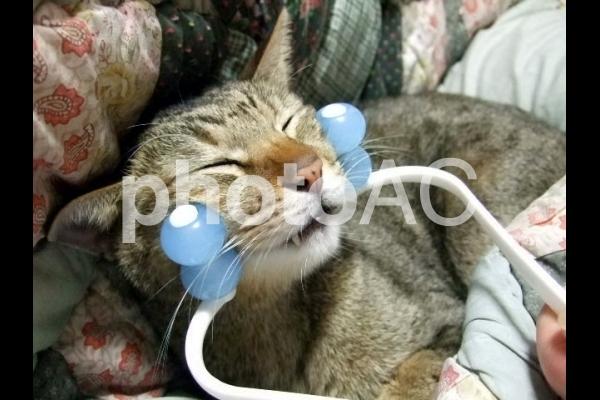 美顔を目指す猫2の写真