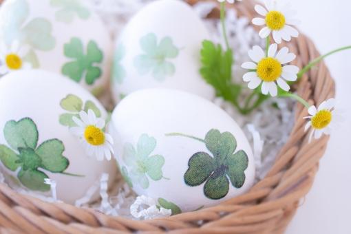 LUCKY HAPPY 卵 玉子 egg 四葉 四つ葉のクローバー よつば 復活祭 easter マトリカリア 巣 かご バスケット わくわく 春