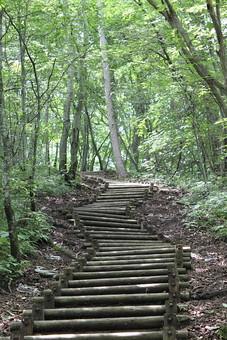 自然 風景 景色 植物 景観 日本 野生 無人 屋外 木 樹木 林 森林 森 葉 葉っぱ 緑 茶色 幹 枝 道 階段 木製 枯れる 育つ 伸びる 生える 枯葉 土 地面 通路 散歩 散策 木漏れ日