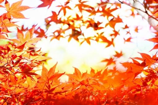 秋の写真素材 写真素材なら 写真ac 無料 フリー ダウンロードok