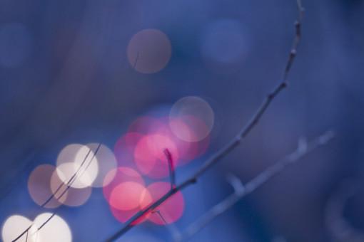 景色 風景 自然 植物 樹木 枝 樹 木 小枝 秋 冬 落葉 光り ぼかし ライト 電気 照明 丸 輪 夜 夜景 アップ クローズアップ 接写 季節 寒い