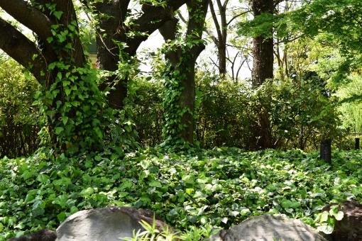 新緑 しんりょく 3月 4月 5月 6月 葉 葉っぱ 緑 黄緑 みどり きみどり 自然 綺麗 爽やか 見上げる 人気 植物 樹木 新鮮 森 林 公園 グリーン 暖かい 季節 若草色 若葉 木洩れ日 木漏れ日 こもれび 明るい 気分 最高 気持ちが良い 空気 クリーン 森林浴 背景 テクスチャ 壁紙 バックグラウンド ヒーリング リラックス 癒し マイナスイオン 初夏 夏 春 リラクゼーション 涼しい セラピー エコ eco アップ 接写 至近距離 ミニチュア風 可愛い かわいい 小さい 雑草 草原 野原