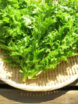 菜 葉 野菜 ざる サラダ 山葵 ワサビ菜 ワサビナ 辛 緑 ベジタブル