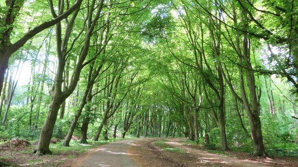 森 林 木 森林 緑の小道 緑の小路 木のトンネル 緑 グリーン さわやか 爽快 リフレッシュ 陽光 木漏れ日 木陰 アムステルダム ヨーロッパ 森林浴 Wallpaper 壁紙 自然 散歩道