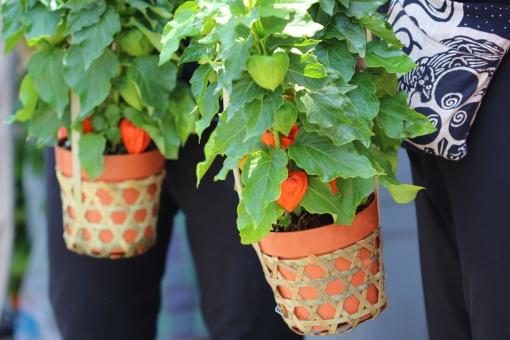 植物 赤 朱色 縁日 お祭り おまつり 夏祭り 風 和風 日本 ほおずき市 ほおずき 風鈴 夏 涼 小物 カテゴリー:花・植物 季節・行事 小