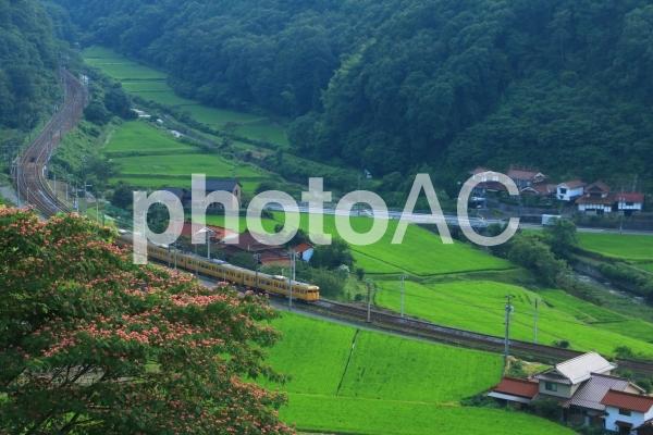 電車/山陽本線【TKPp】の写真