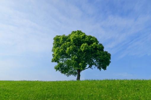 自然 植物 空気 草 空 青空 クリーン エコロジー 草原 青 木 樹木 シンプル 雲 緑 芝 芝生 丘 広大 さわやか 爽やか 爽快 鮮やか すがすがしい 気持ちいい 気持ち良い 晴れ 天気 ナチュラル グリーン 黄緑 新緑 明るい 葉っぱ はっぱ 風景 エコ 環境 eco eco いやし リラックス リラクゼーション やすらぎ 安らぎ マイナスイオン 健康 背景 背景素材 テクスチャ テクスチャー バックグラウンド