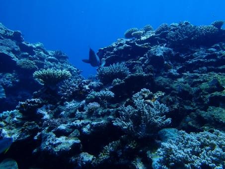 透明 グレートバリアリーフ グレート バリア リーフ 海外 珊瑚 サンゴ サンゴ礁 海 青 カラフル 魚 自然 野生 生命 世界遺産 オーストラリア ケアンズ 夏休み 夏 バカンス スキューバ ダイビング スノーケル スノーケリング エコ 環境 風景 背景