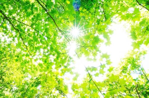 もり 森 背景 バックグラウンド 林 葉 枝 空 太陽 日光 さわやか 爽やか 日差し 陽射し 日射し 木漏れ日 こもれび 木洩れ陽 紫外線 uv 光合成 二酸化炭素 環境 きれいな空気 登山 ハイキング 深呼吸 空気 森林 緑 葉っぱ グリーン マイナスイオン
