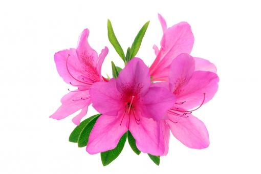 初夏に咲く花に関する写真写真素材なら写真ac無料フリー