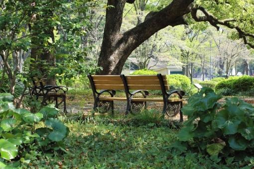 木陰 ベンチ 涼しい 緑 待ち合わせ 楽しい 秘密 休憩 深呼吸 新緑 のんびり 後ろ姿 楽しみ 時間 木漏れ日 こもれび 熱中症 ゆっくり おしゃべり 会話 お喋り 昼休み