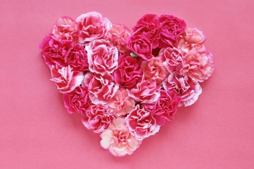 花 植物 ハート型 カーネーション ピンク 母の日 気持ち バレンタイン LOVE テクスチャ 背景