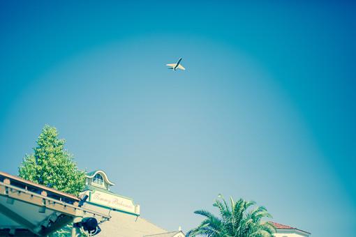 自然 植物 木 樹木 南国植物 葉 葉っぱ 緑 空 青空 晴天 天気 晴れ 青 グラデーション 飛行機 交通 飛ぶ 運転 建築 建築物 建物 看板 室外 屋外 無人 ローアングル アメリカ 外国